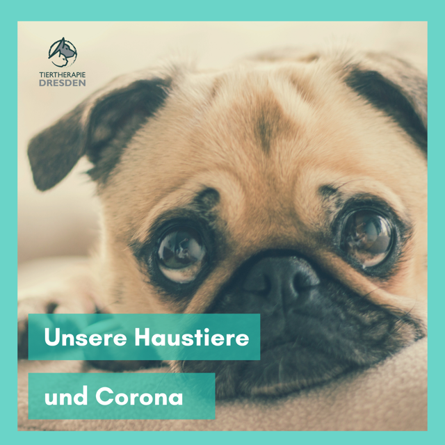 Corona und unsere Haustiere Hundephysiotherapie Dresden (2).png